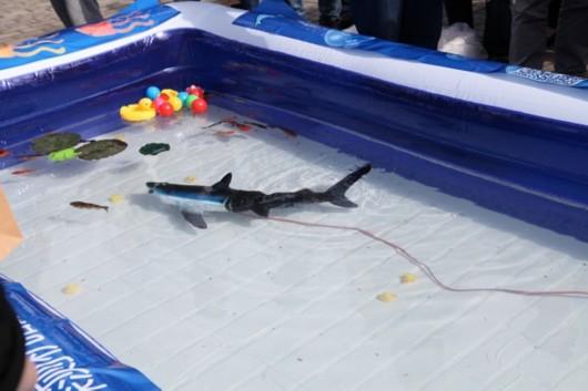 """水下机器人通过首航考验 更多仿生机器鱼即将""""出海"""""""