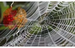 纯素蜘蛛丝:可当低密度聚乙烯等工程塑料用