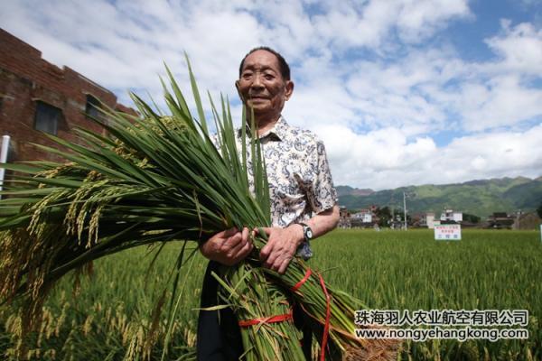 珠海羽人|袁隆平宣布成果:水稻亲本去镉技术获突破