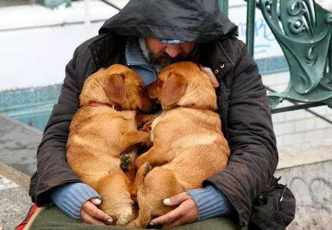 中国克隆犬技术异军突起 可助人类攻克这一难题