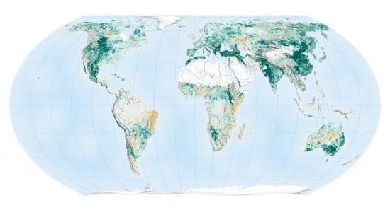 回收人告诉你:废品回收就是植树造林