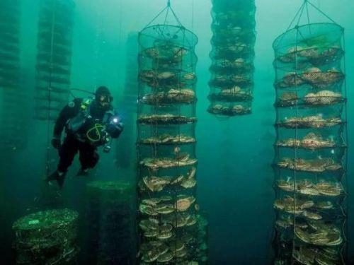 [最新]水下机器人波塞冬I 将改变水产养殖的方式