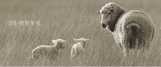 羊毛出在羊身上,而你来自由利UONI围巾心上