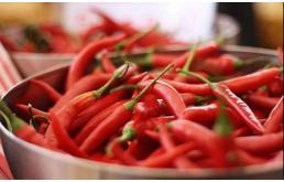 当辣椒成为材料,可提高太阳能效率
