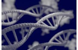 肿瘤抑制基因失活,癌细胞实现免疫逃逸
