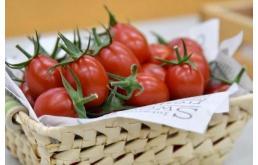基因编辑番茄:每斤约89元