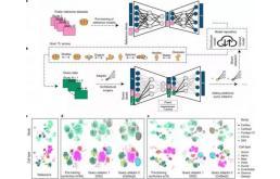 人工智能,助力识别病变细胞
