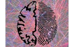 """大脑的""""指纹""""识别"""