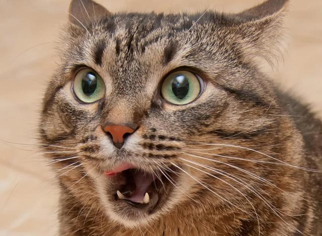惊讶猫再现!车轱辘实际体验BX7 TS 2秒单轮脱困