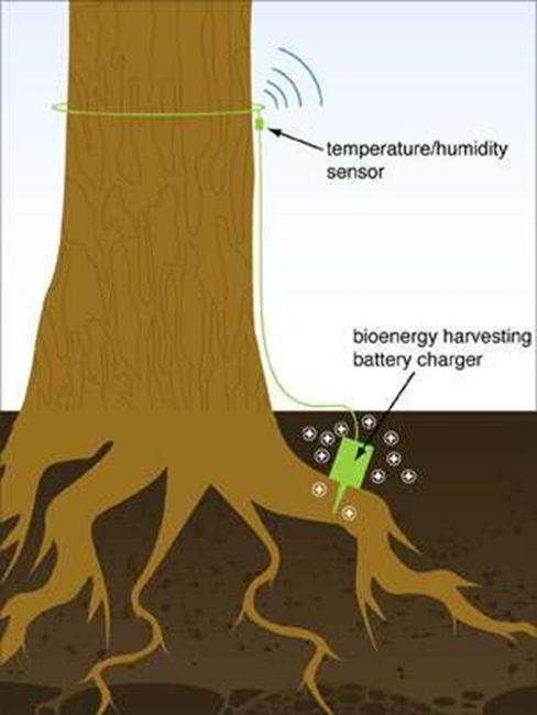 从无人机群到树木电池,科技推动全球生态环境保护
