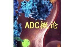 ADC的免疫原性