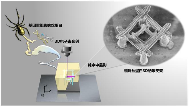 最新突破!中国科学家研发出纳米机器人,材料竟是蜘蛛丝?