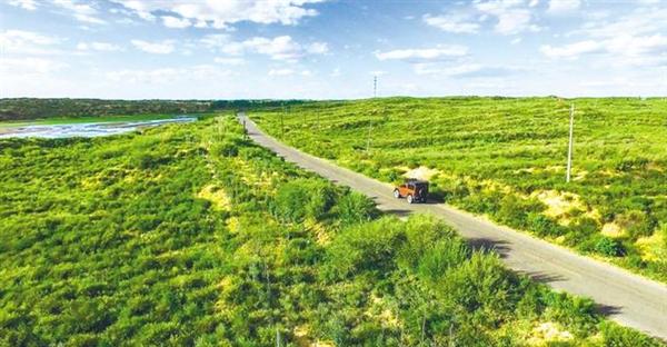 """毛乌素沙漠即将从陕西版图""""消失"""" 沙化治理率93.24%"""