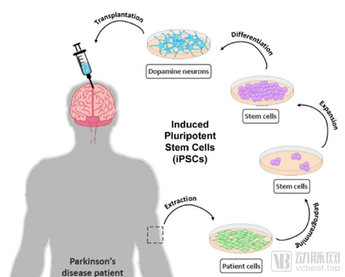 多潜能干细胞.png
