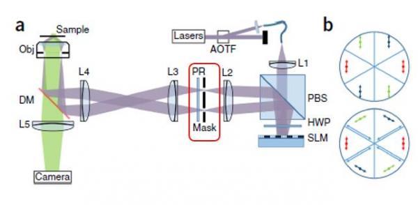 想洞悉细胞线粒体内部精细结构?全新SIM超分辨技术有话讲!