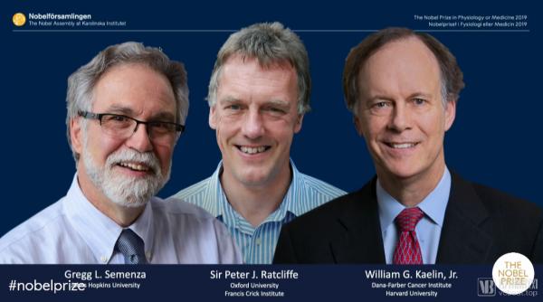 2019诺贝尔生理学或医学奖揭晓:英美三位科学家因理论研究获奖,将分享约650万元奖金