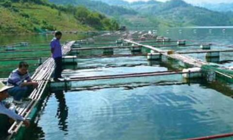 应用在水产养殖参数检测中的水质传感器
