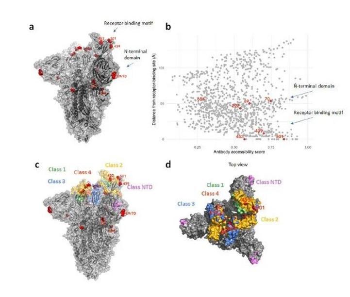 针对新冠病毒,我们始终坚持多靶点协同的小分子抗病毒药物研发