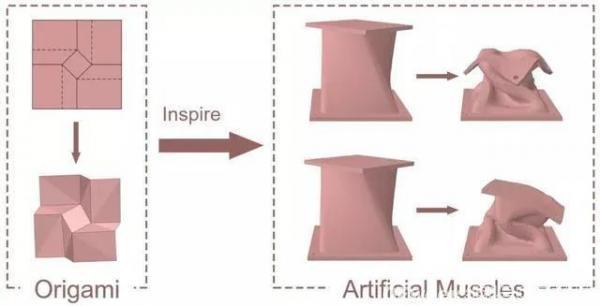 陈根:模块化软体机器人,更柔软更灵活