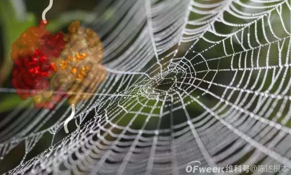 陈根:纯素蜘蛛丝,带来材料新体验