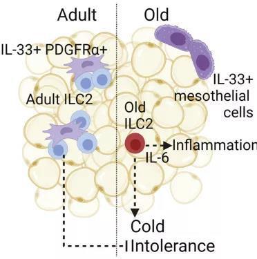 陈根:免疫细胞,或可影响人的抗寒能力