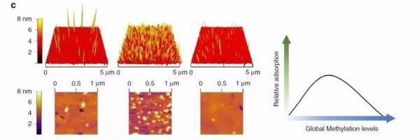 """AI芯天下丨液体活检再添""""神器"""" 纳米金颗粒来助力"""