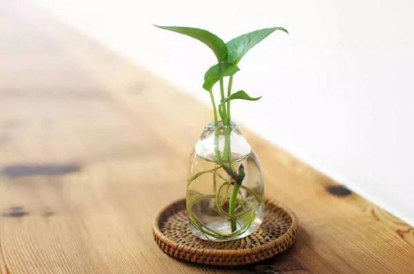 关于植物生长环境中空气流量测量方法详解