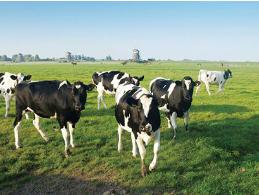 超声波测距传感器模块在畜牧业的应用