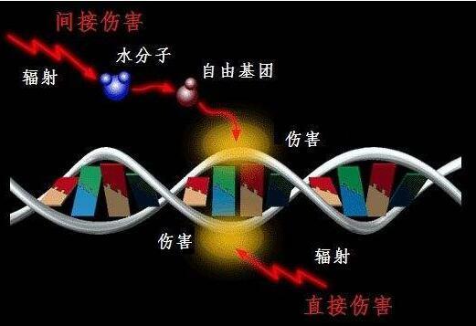 光纤温度传感器在生物细胞辐射培养过程中的温度监控