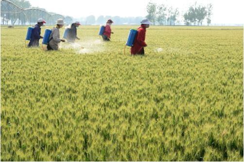 智能化农业物联网助力传统农业升级