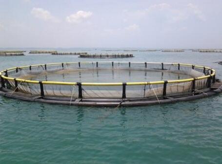 水产养殖为什么需要水质PH传感器