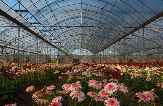 花卉大棚中应用到的土壤湿度传感器