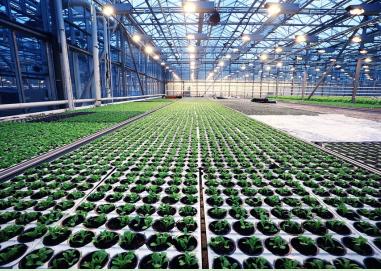 CO2传感器在温室农业和垂直农业中的应用