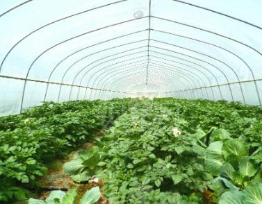 抗高湿二氧化碳传感器在温室大棚中的应用