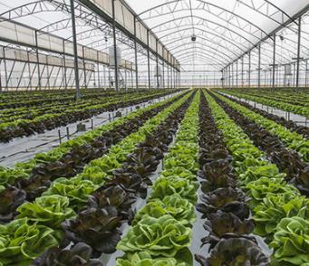 二氧化碳传感器模块用于密闭大棚种植CO2浓度检测