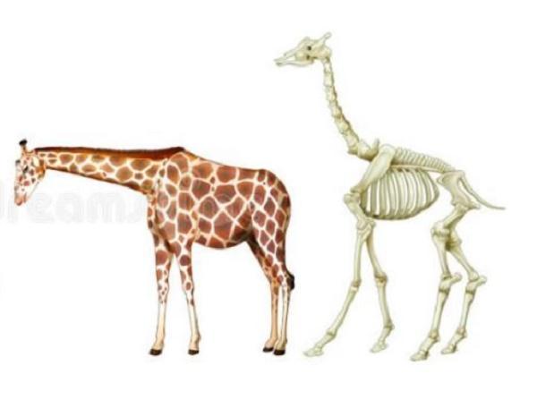 创想三维天然骨骼3D打印机,科幻技术能成为现实吗?