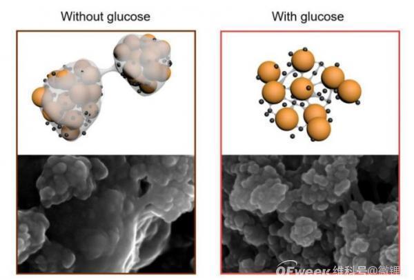 新研究发现糖可以让锂硫电池性能更持久