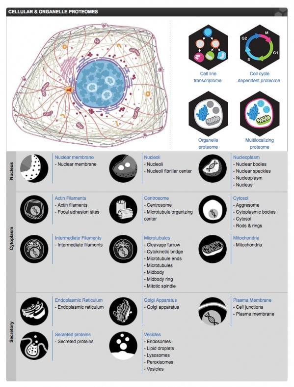极链科技摘金全球权威HPAIC人类蛋白质图谱分类挑战赛