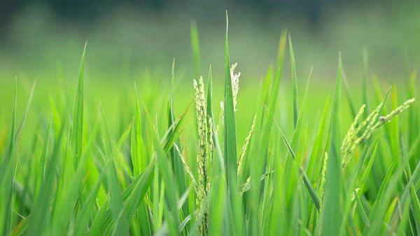 科普:农业气象站在智慧农业中的应用