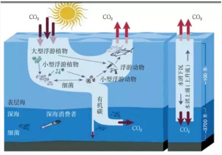 新材料情报NMT | 瞄准碳中和愿景 海洋碳汇催生产业新机遇