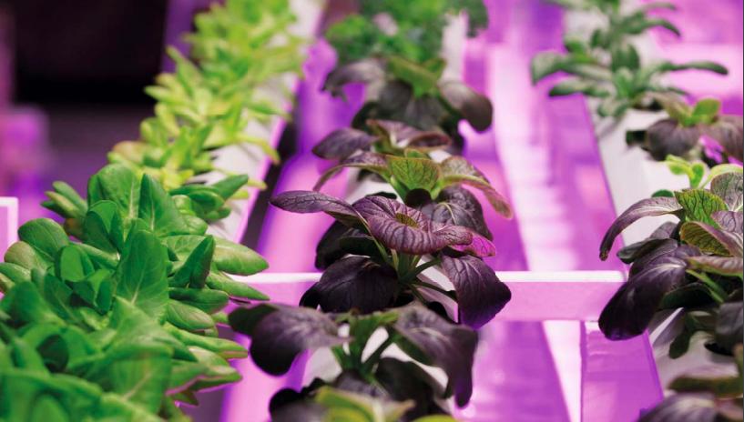 艾迈斯欧司朗新款升级版白光LED照亮新型农业发展插图