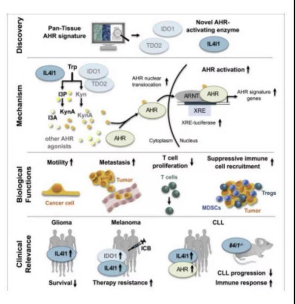 陈根:免疫疗法3+1,新靶点阻断为癌症治疗开辟新途径
