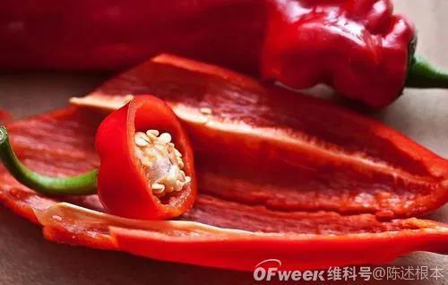 陈根:辣椒素动员造血干细胞,健康新策略