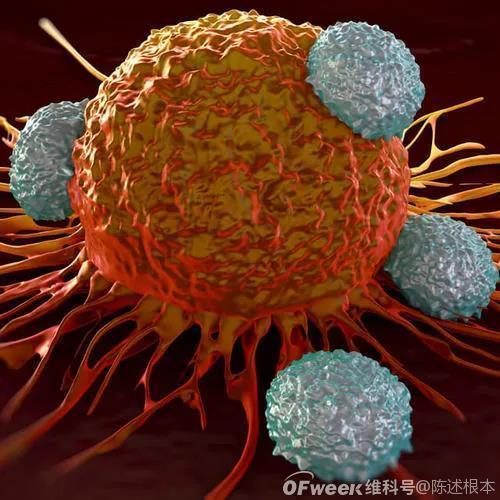 陈根:肿瘤与肿瘤微环境,争夺营养打击免疫