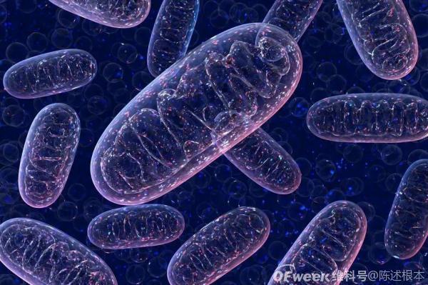 陈根:线粒体DNA突变,提高癌症生存率?