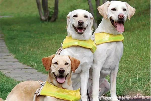 陈根:机器人导盲犬——导盲新可能