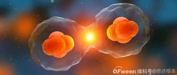 陈根:类器官迅猛发展,用人造器官对抗疑难杂病