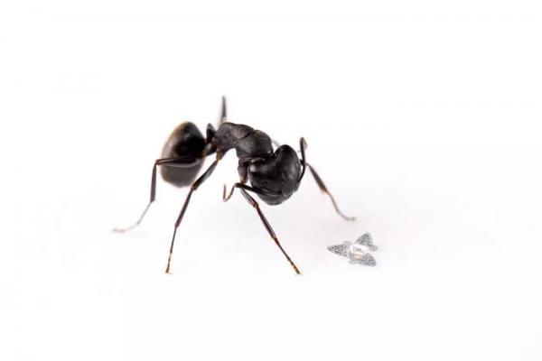 陈根:研究开发——史上最小的微型飞行器