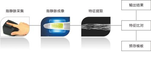 人工智能新科技:深度解析指静脉识别的源起、应用与发展